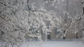 Snow goes to the trees. White fluffy snow, slowly falls on the frozen branches of trees in the daytime in the park strewn with snow stock video footage