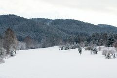 Snow on golf course in winter, forest background, copy space. Snow on golf course landscape in winter with forest in background, copy space Stock Images
