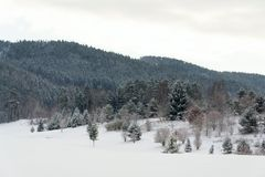 Snow on golf course in winter, forest background, copy space. Snow on golf course landscape in winter with forest in background, copy space Stock Photos