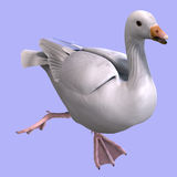 Snow goose. 3D rendering of a snow goose with clipping path and shadow over white Royalty Free Stock Photography