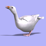 Snow goose. 3D rendering of a snow goose with clipping path and shadow over white Stock Image
