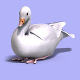 Snow goose. 3D rendering of a snow goose with clipping path and shadow over white Royalty Free Stock Photos