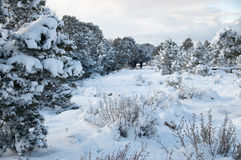 Snow at the Grand Canyon Royalty Free Stock Images