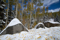 Snow on Granite Boulders and Yellow Aspens Stock Images