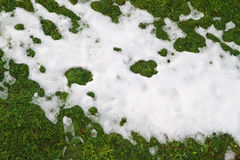 Snow on grass Royalty Free Stock Images