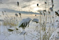 Snow Grass Stock Photography