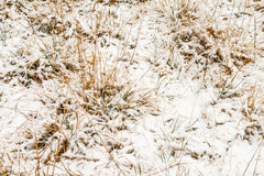 Snow on the grass Stock Image