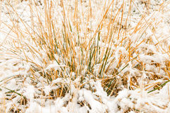 Snow on the grass Royalty Free Stock Photography