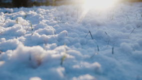 Snow on the grass in evening stock video