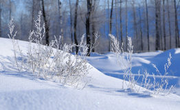 Snow and grass in the frost Stock Images