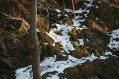 Snow Grass stock photography