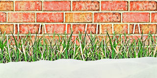 Snow on a grass. Stock Image