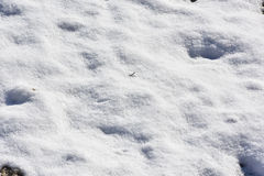 Snow on grass under contrasty sun Royalty Free Stock Photography