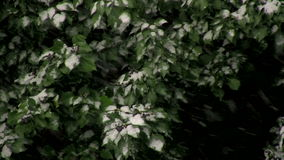 Snow on Green Leaves stock video footage