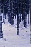 Snow on the Ground in a forest royalty free stock images