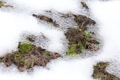 Snow on the ground in nature. In the park in nature Royalty Free Stock Photos