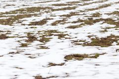 Snow on the ground in nature. In the park in nature Stock Image