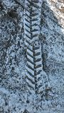 Snow on the ground with tire tracks Stock Photos