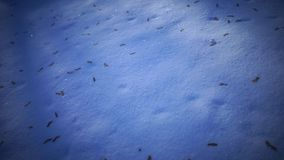 Snow ground with tree leaves stock video footage