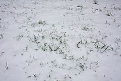 Snow on the ground. Winter textured background Royalty Free Stock Images