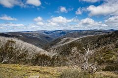 Free Snow Gums In The Victorian Alps, Victoria, Australia Stock Photography - 115690332