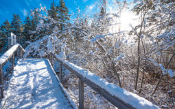 Snow on a handrail of a foot bridge in a winter woods. Fresh fallen snow. Royalty Free Stock Photography