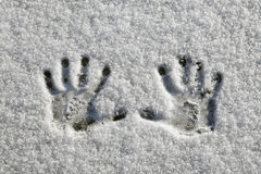 Snow Hands Stock Image