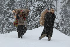 Snow hardships. Carrying woods to warm their families at home in cold weather in kashmir Royalty Free Stock Photography
