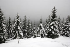 Snow in the Harz mountains Stock Image