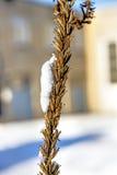 Snow-hat on wild plant Royalty Free Stock Image