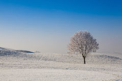 Snow and hearfrost covered trees in the frosty morning. Royalty Free Stock Photo