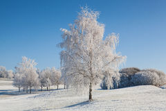Snow and hearfrost covered trees in the frosty morning. Stock Photo