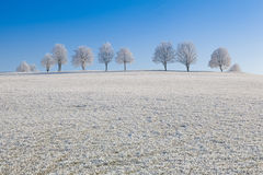 Snow and hearfrost covered trees in the frosty morning. Royalty Free Stock Photography
