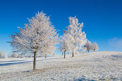 Snow and hearfrost covered trees in the frosty morning. Stock Photography
