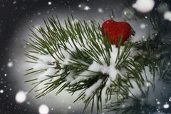 Snow hearts red winter two. Winter in all its manifestations snow-covered streets of trees and lawn Royalty Free Stock Images