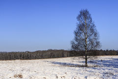 Snow on High Veluwe Royalty Free Stock Images