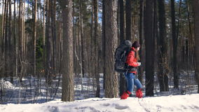 Snow hiker hiking in winter forest. Travel, trekking, extreme sport concept. stock footage