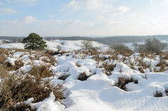 Snow on hills in Dutch heathland Royalty Free Stock Image