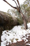 Snow in the Hills of Mount Hotham Stock Photography