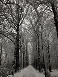 Let is snow. Snow in holland woods royalty free stock photography