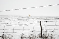 Snow Horse Stock Images