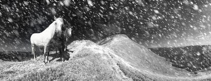 Snow horses in the storm Stock Photo