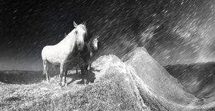 Snow horses in the storm Royalty Free Stock Images