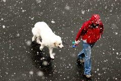 Snow Hound. Man walking his dog in fresh snowfall Royalty Free Stock Photography