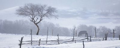 The tree in the snow. In the snow, I saw the small tree, it stands in the wind and snow, I was moved by its tenacity, I held up the camera. This is a picture royalty free stock image
