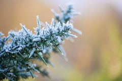 Snow and ice on the branch of a fir tree on a cold, icy winter day. Close up. Snow and ice crystals on the branch of a fir tree on a cold, icy winter day. Close stock photos