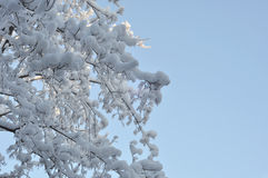 Snow and ice on branches Stock Image