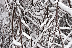 Snow and Ice Cling to Branches Stock Photography