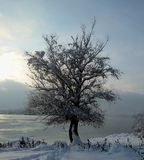 Snow and ice covered tree in the winter freezing day. River Danube environment, Futog Serbia. Snow and ice covered tree in the winter freezing day. River Danube stock images