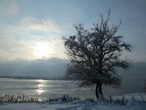 Snow and ice covered tree in the winter freezing day. River Danube environment, Futog Serbia. Snow and ice covered tree in the winter freezing day. River Danube royalty free stock photos
